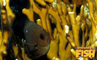 Magnificent Elegance Coral