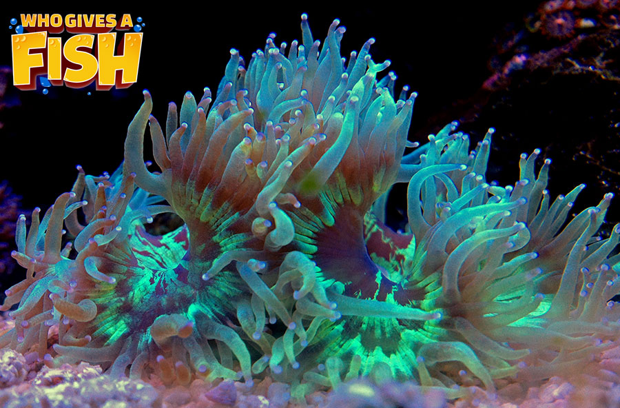 Green and Purple Elegance Coral