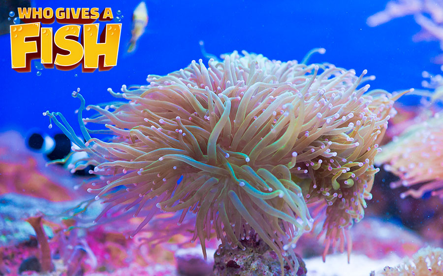 Stunning Torch Coral